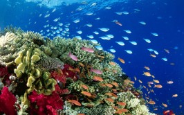 Animals___Under_water_Schools_of_fish_on_a_coral_reef_101249_